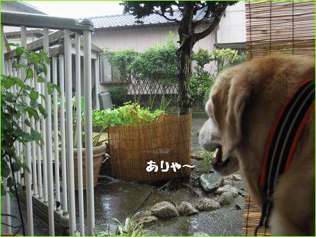 すごい雨です。