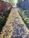 銀杏の小道