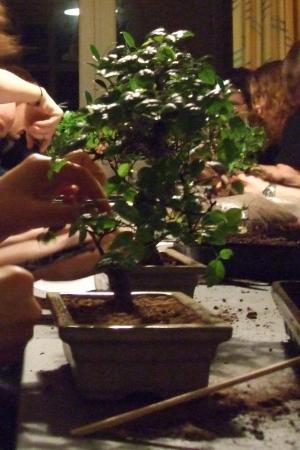 bonsai300klip.jpg