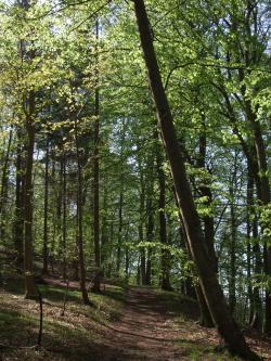 skoven1.jpg