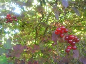 skoven300okt1.jpg