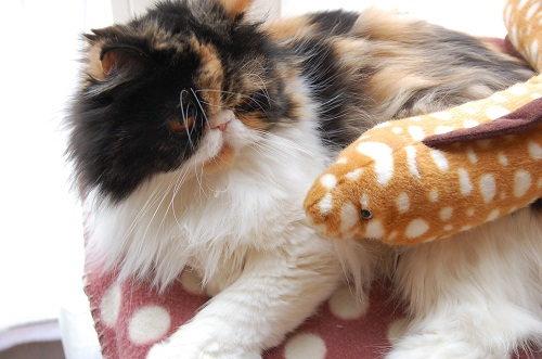 sakura con morena
