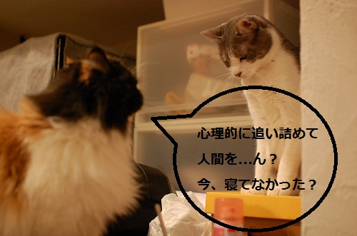gatos en casa5
