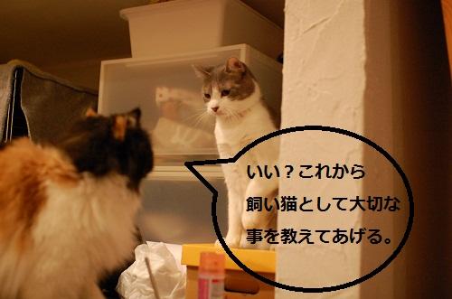 gatos en casa2