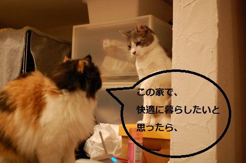 gatos en casa3