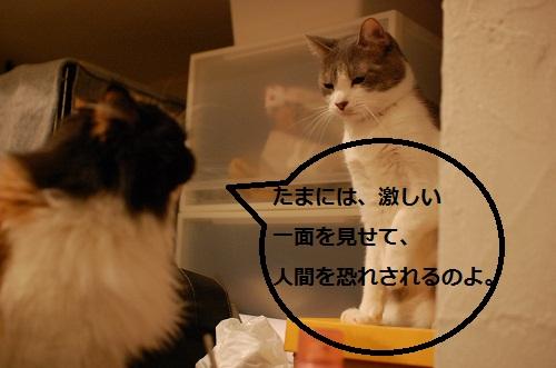 gatos en casa4