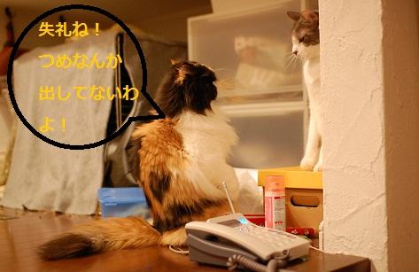gatos en casa10