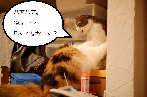 gatos en casa9