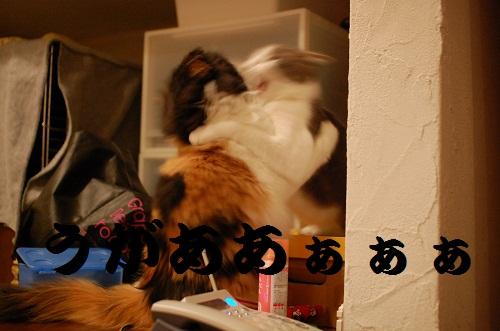 gatos en casa8