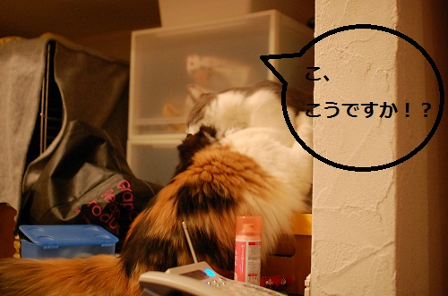 gatos en casa7