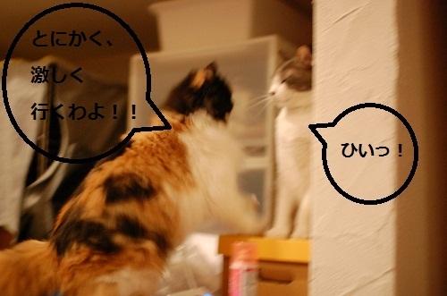 gatos en casa6