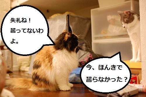 gatos en casa14