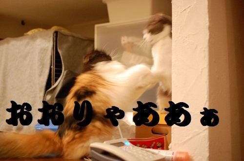 gatos en casa15