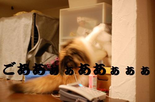 gatos en casa12