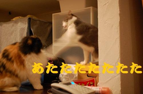 gatos en casa13