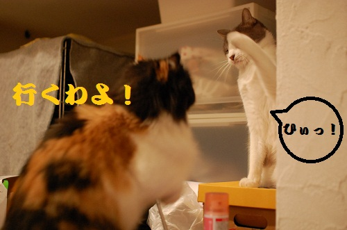 gatos en casa11