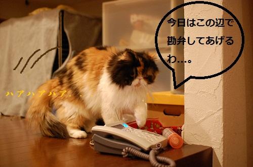 gatos en casa17
