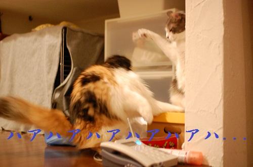 gatos en casa16