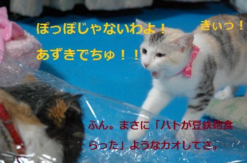 gato en bolsa 5
