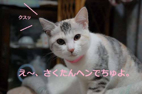gato en bolsa 3