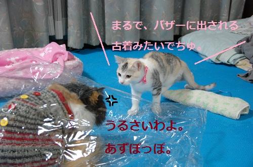 gato en bolsa 4