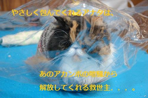 gato en bolsa 2