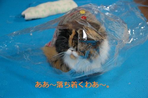 gato en bolsa 1