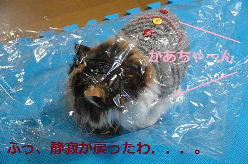 gato en bolsa 9