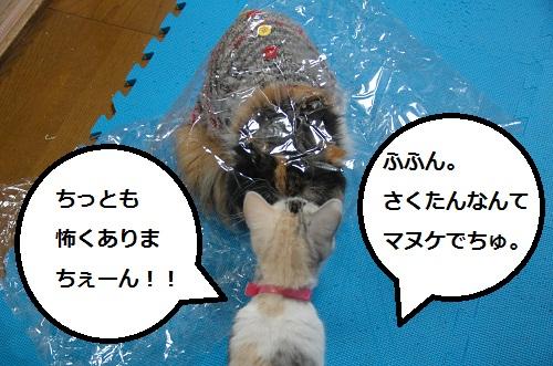 gato en bolsa 7