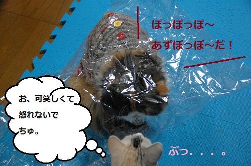 gato en bolsa 6