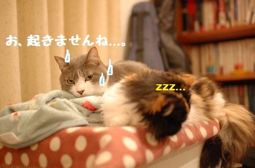 duermo con ti3