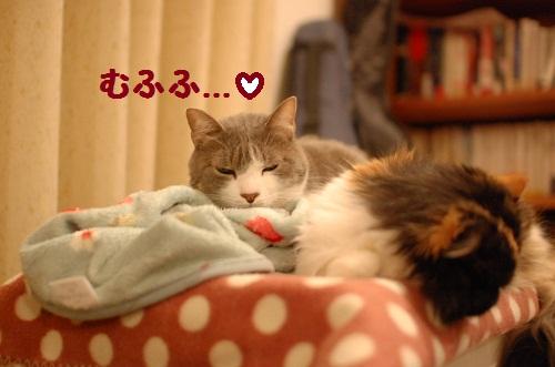 duermo con ti4