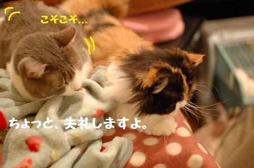 duermo con ti1