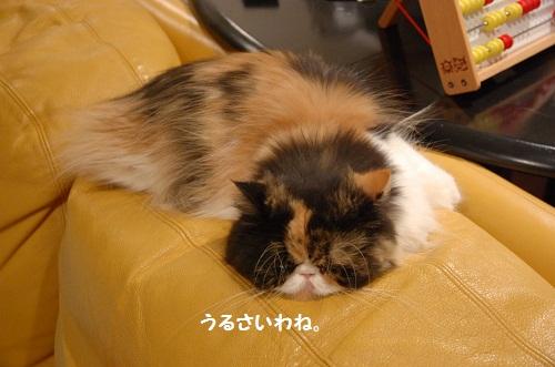 esta dormiendo 3