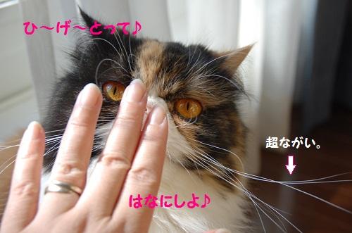 princesa sakura 2