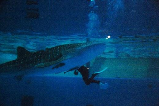 acuario hakkeijima 3