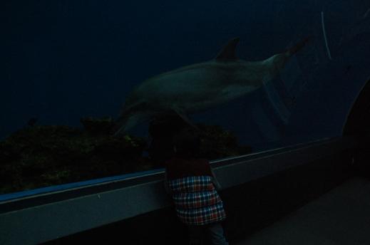 acuario hakkeijima 2