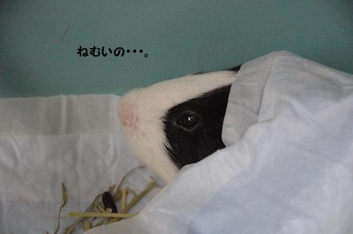 el hibernante 3