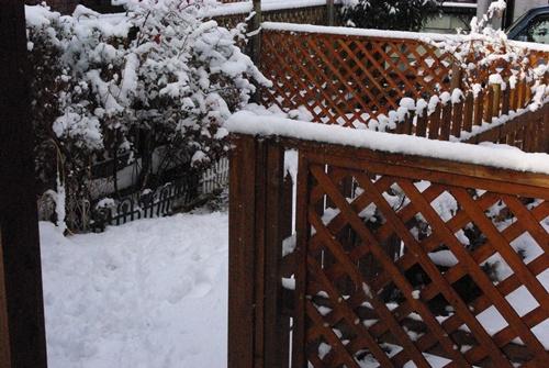 雪です。。