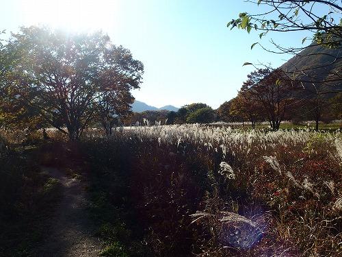 20141018_soumasan-024.jpg