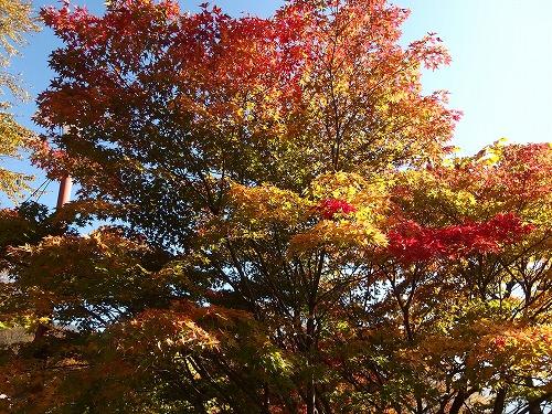 20141025_myouhougatake-007.jpg