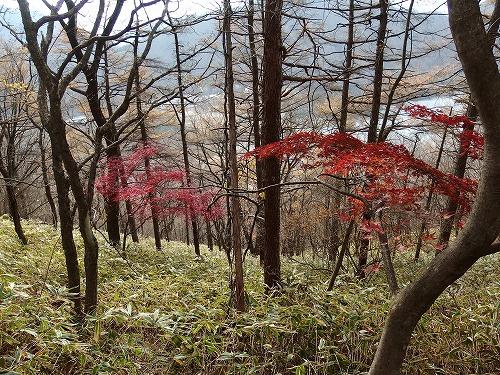 20141108_harunahuji-012.jpg