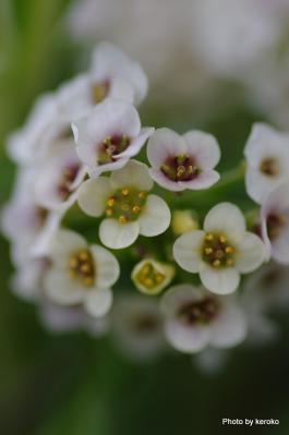 2013-01-17みずの森植え込みの小花