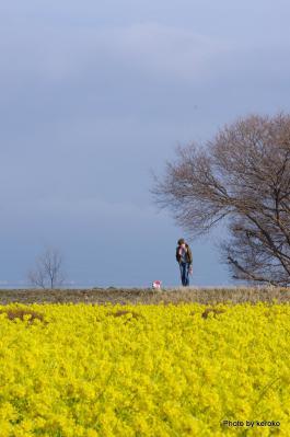 2013-02-14守山なぎさ公園菜の花畑1