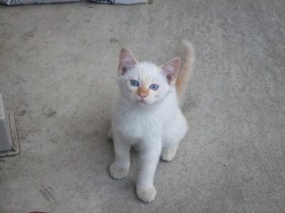 子猫 A1
