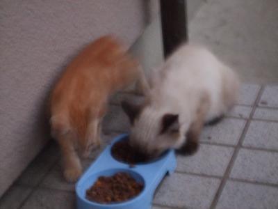 子猫 A5