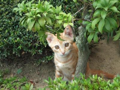 子猫 A6