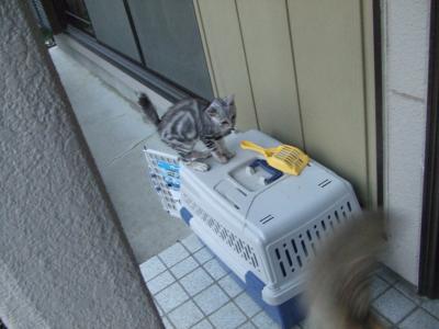 子猫 A7