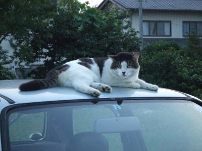 よその猫 3