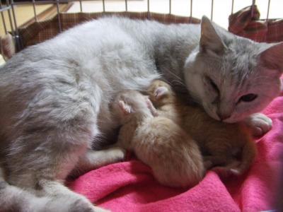 シーナと赤ちゃん 2